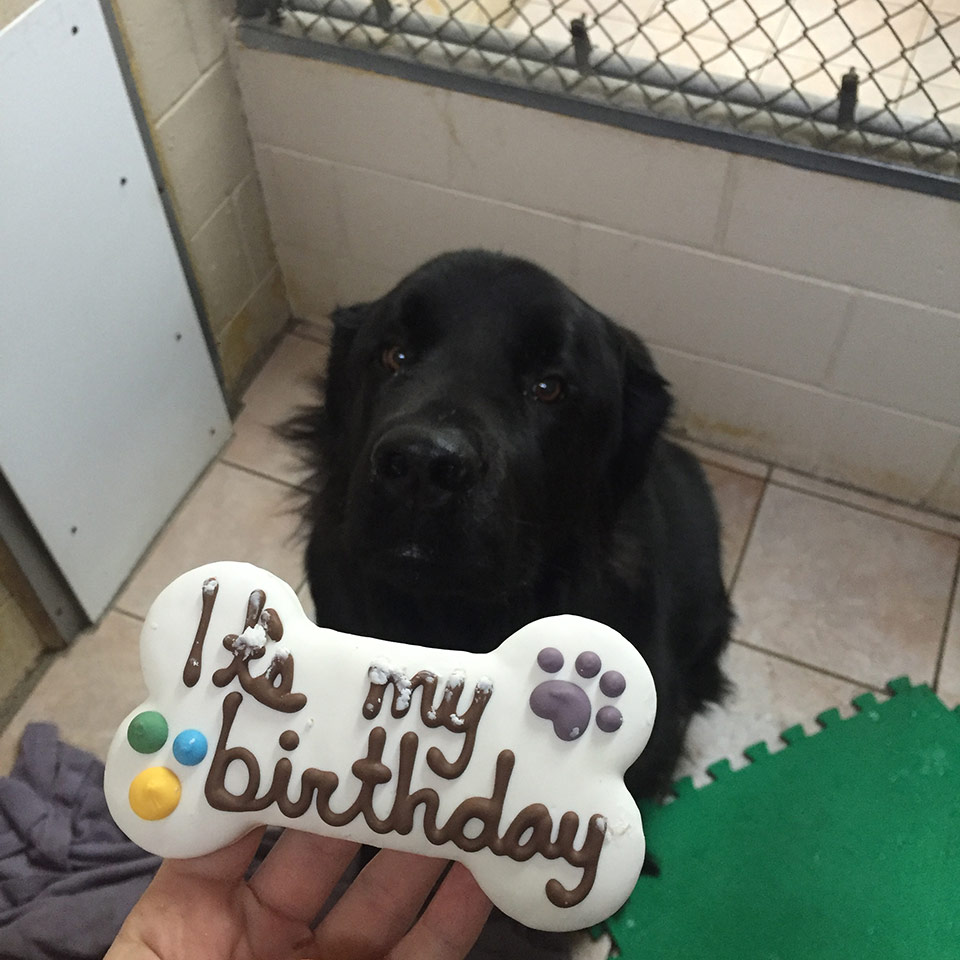 dog being offered birthday treat